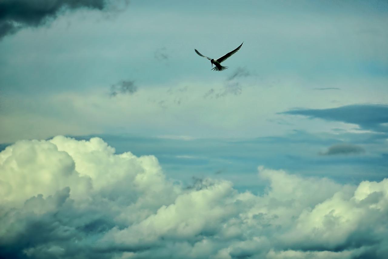 фото небо птицы облака отличительными