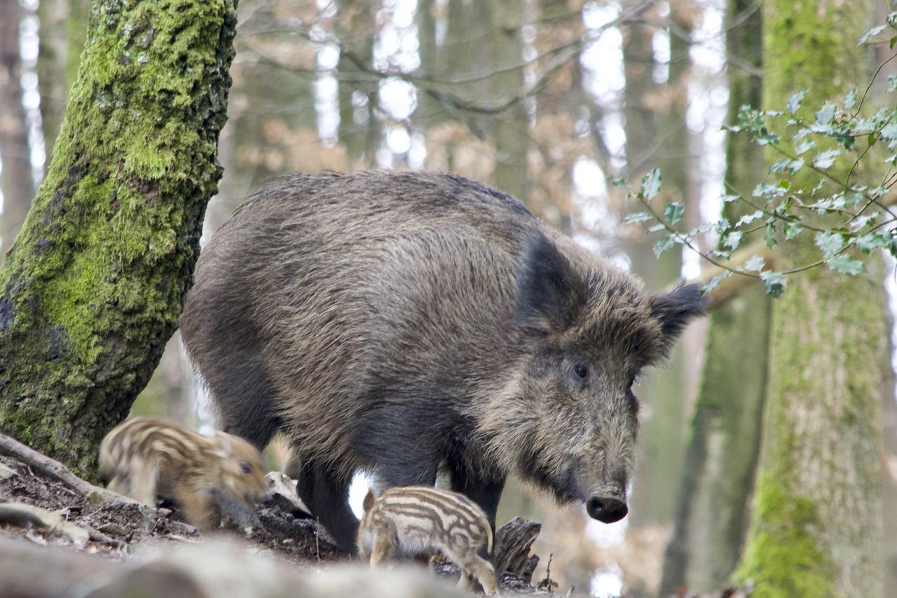 нанести абхазские дикие животные фото потом