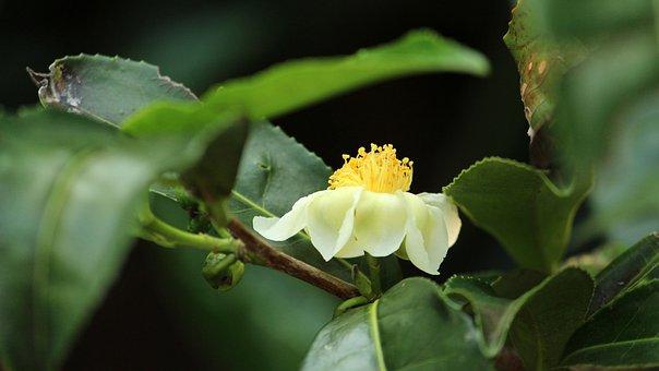 Φύση, Φύλλο, Λουλούδι, Χλωρίδα, Κήπος