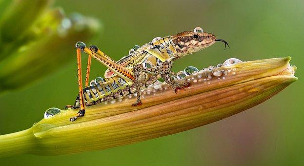 Digiart, Insect, Dierenwereld, De Natuur