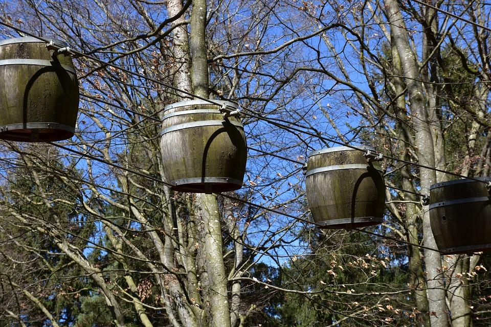 Klettergurt Baum : Holz baum alt · kostenloses foto auf pixabay