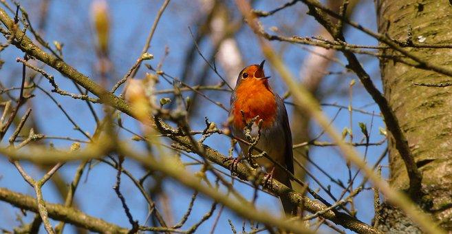 Tree, Nature, Bird, Outdoors, Wildlife