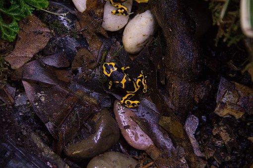 Nature, Frog, Dart Frog, Biology, Wood