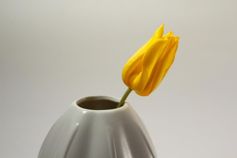 Tulpe Vase Wachsen Kostenloses Foto Auf Pixabay