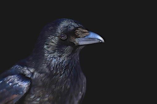 Raven, Common Raven, Bird, Animal World