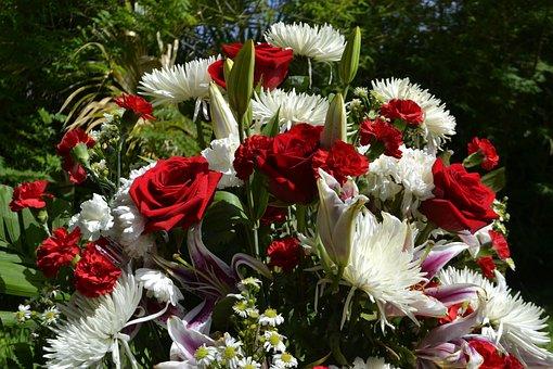 Flower, Nature, Flora, Floral, Summer