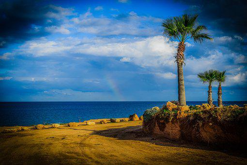 Palm trees 3288034  340