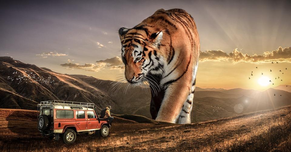 Nature, Outdoors, Sunset, Sky, Safari, Sun, Wildlife