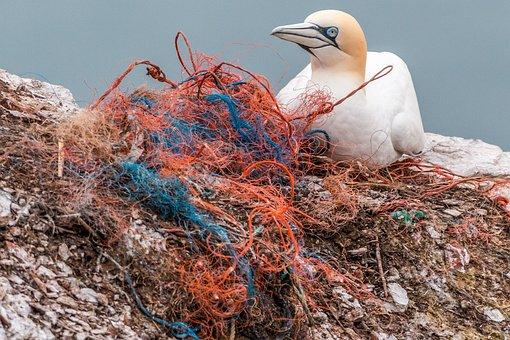 セーフティ ネット, 魂ネットワーク, プラスチック廃棄物, 海洋汚染, 汚染