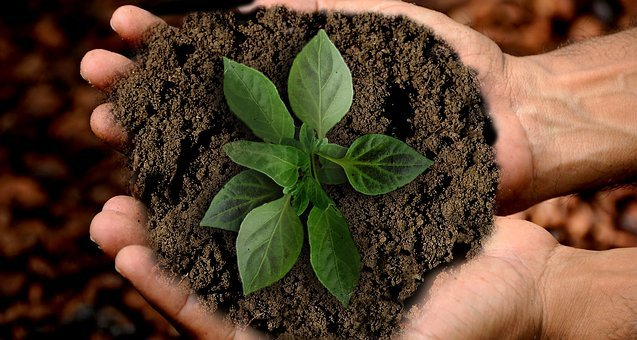 Earth, Sprout, Leaf, Sustainability