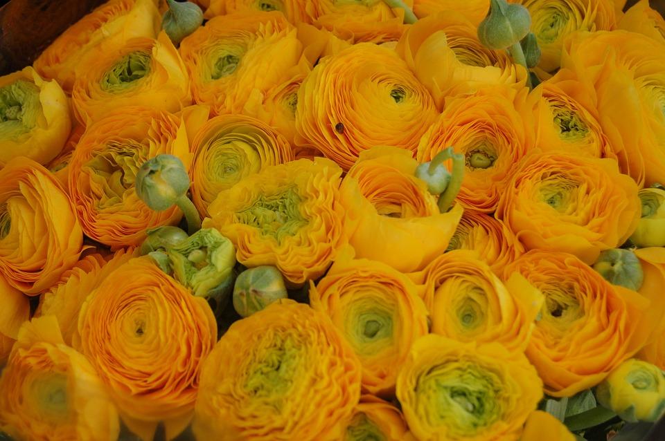 Download 8300 Wallpaper Bunga Warna Kuning HD Terbaik