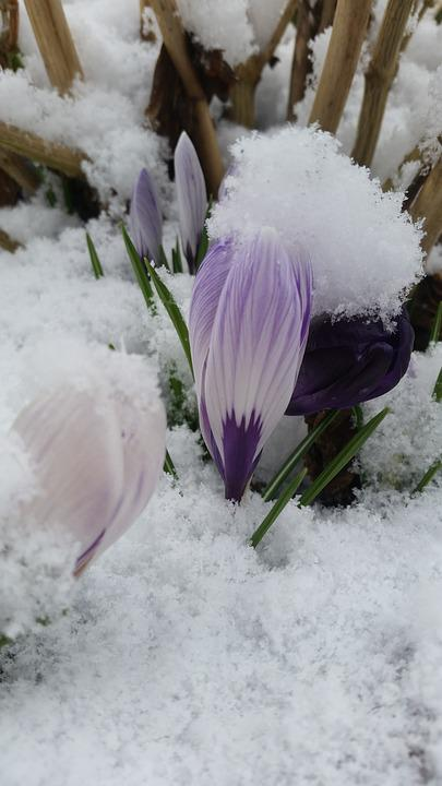 Inverno natura neve foto gratis su pixabay for Immagini desktop natura