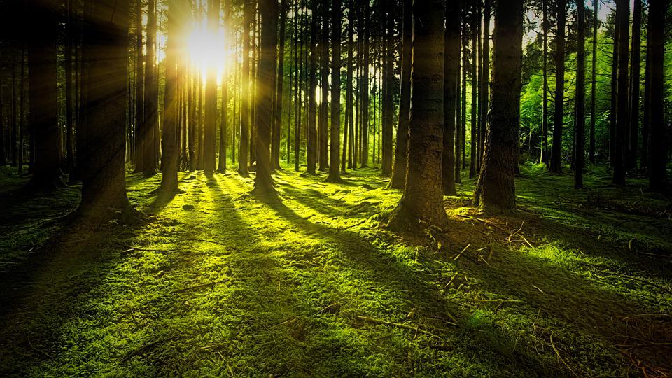 Bäume, Moos, Wald, Sonnenlicht, Sonnenstrahlen, Wälder