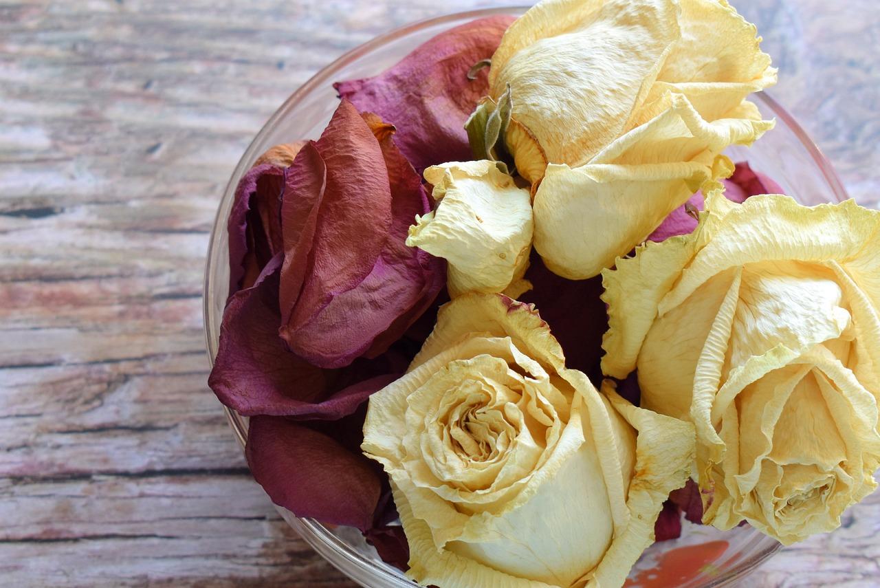 засушенные розы в картинках канал орт