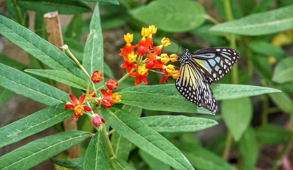 Schmetterling Futterung Farbe Kostenloses Foto Auf Pixabay