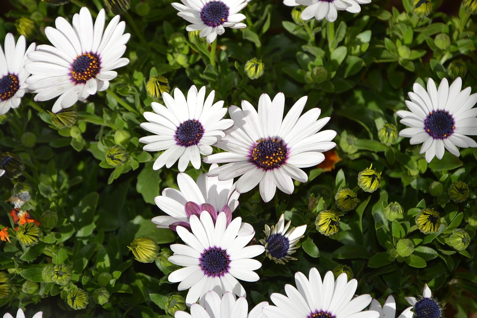 White flowers plants plant free photo on pixabay white flowers plants plant summer garden nature mightylinksfo