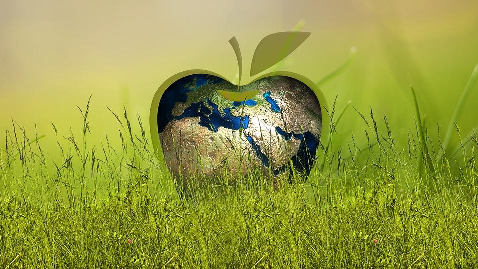 company sustainability