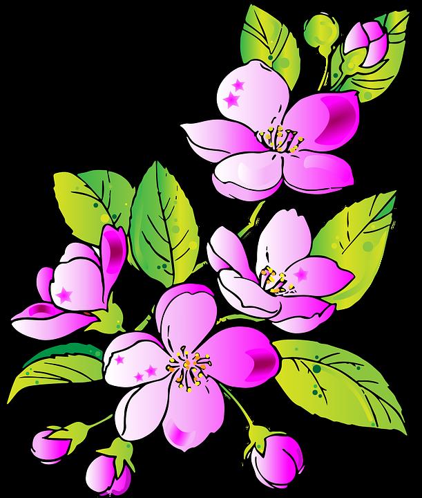 Flores Dibujo Flor Color De Gráficos Vectoriales Gratis En Pixabay