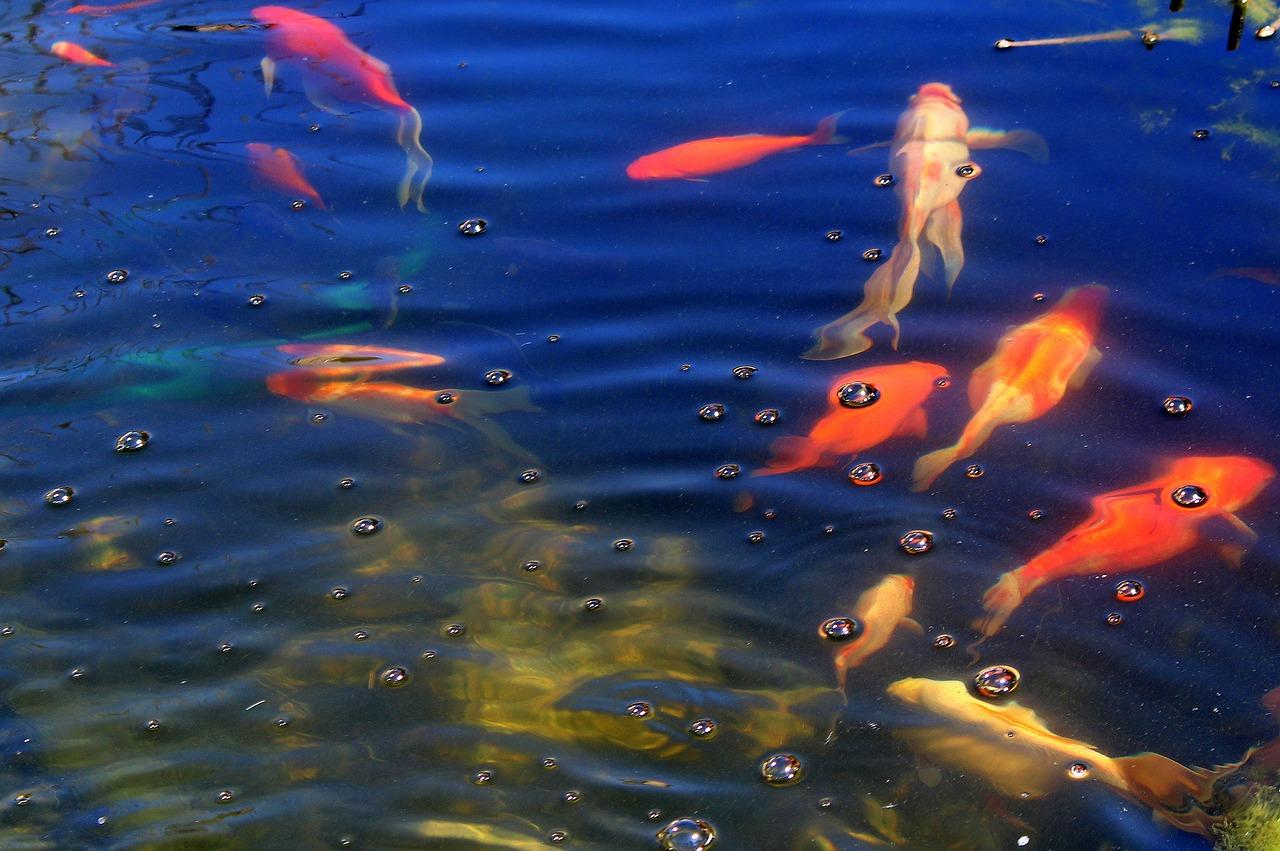 картинка рыбы плавают в воде технологии строительства влечет