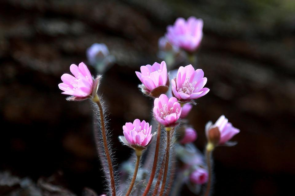 Top 5 Places Where Nature Blooms
