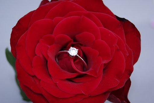花, ローズ, 花びら, 愛, ネイチャー, 赤, 赤いバラ, リング
