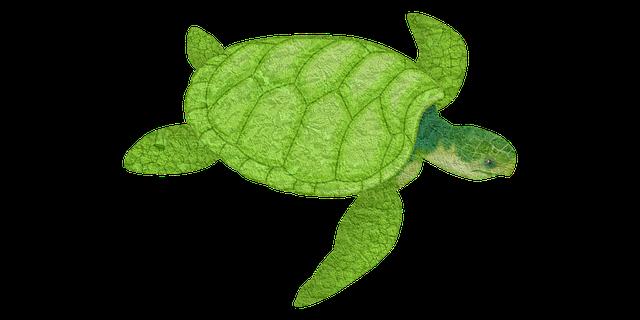 kura hewan laut lambat gambar gratis di pixabay foto cantik