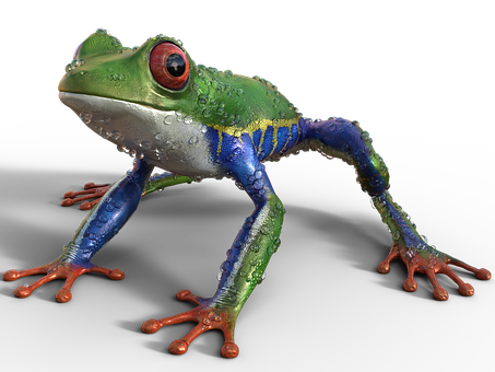 Frog, Nature, Exotics, Exotic, Sitting