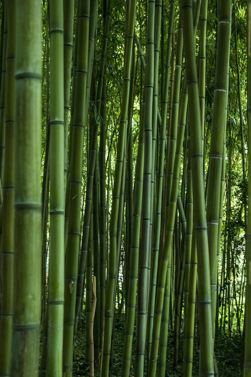 словам картинка с бамбуком крыму, особенно период