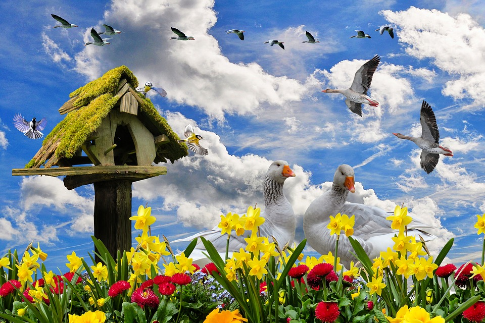 Природы Весна Цветы Весенние - Бесплатное фото на Pixabay