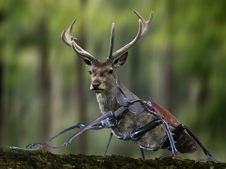 Digiart, Photoshop, Kever, Stag Kever