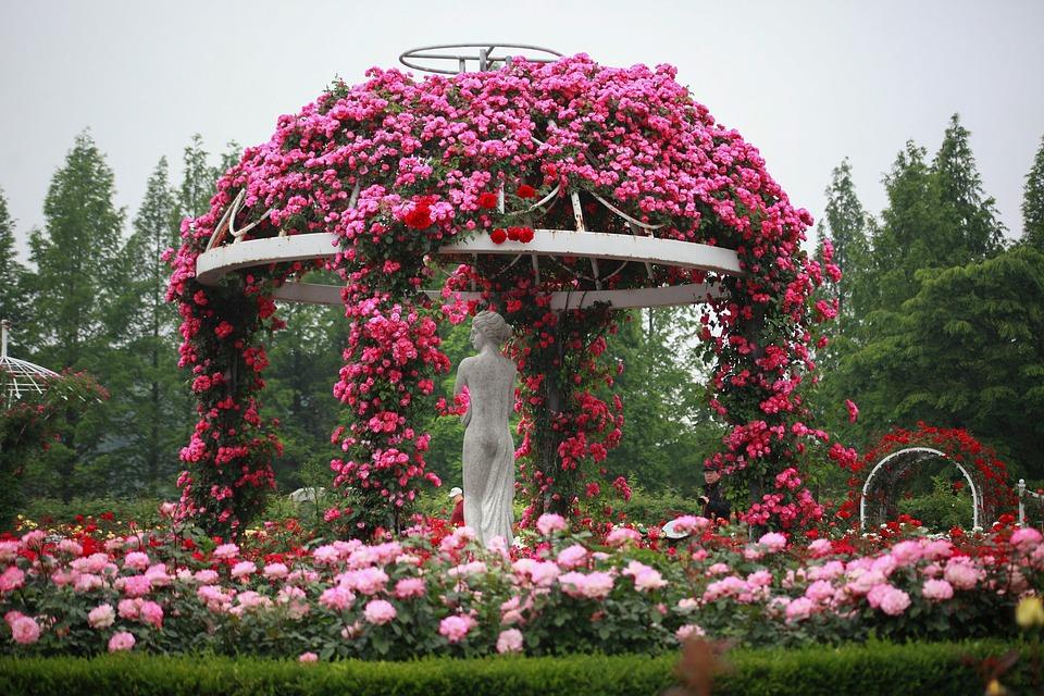 Bildresultat för blommor trädgård