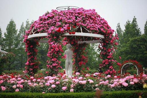 Kwiaty, Ogród, Charakter, Rośliny