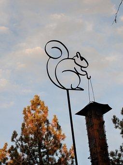 Sky, Nature, Tree, Bird Feeder, Squirrel