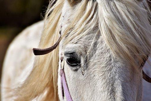 Horse, Horse Head, Mold, Reiterhof