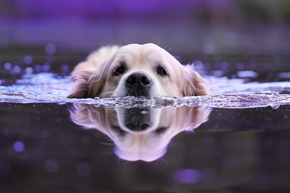 Perro, Agua, Mojado, Animales, Animal, Naturaleza