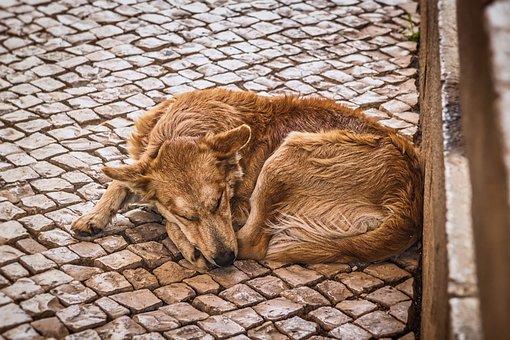 В Ленинградской области решают, что делать с бездомными собаками