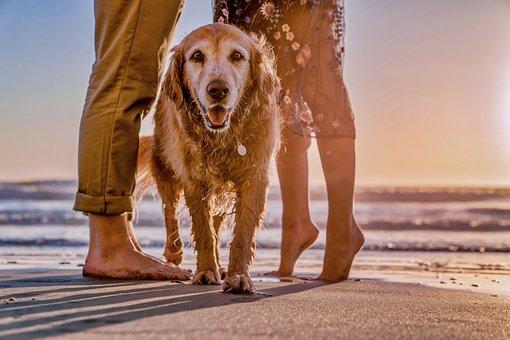 Dog, Young, Cute, Beach, Animal