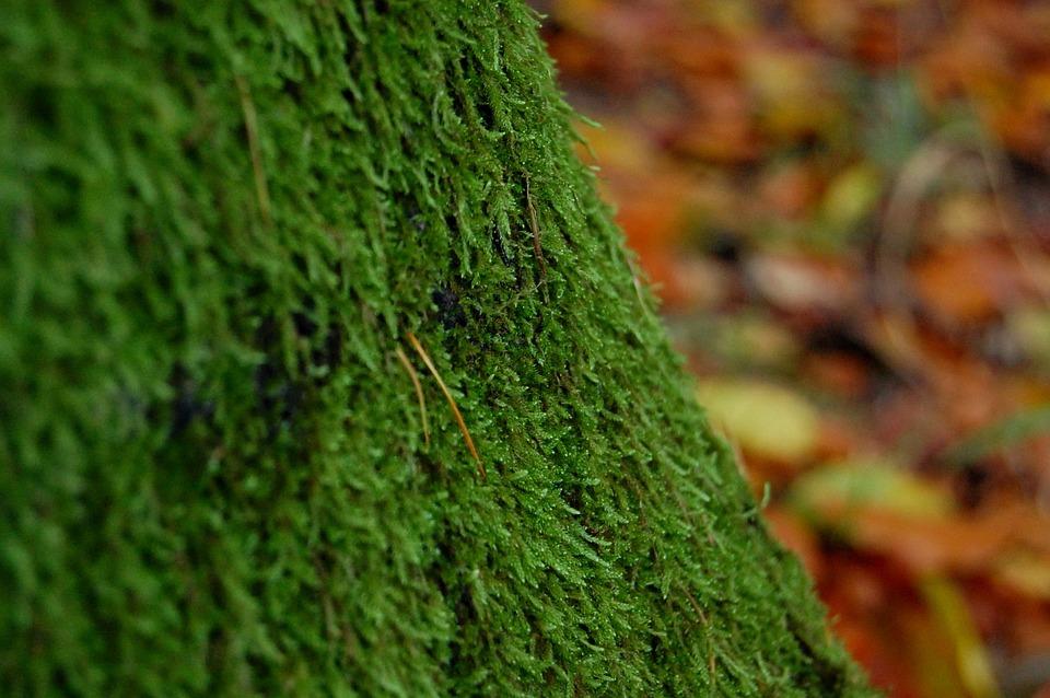 Doğa Arka Plan Yaprak Pixabayde ücretsiz Fotoğraf
