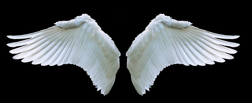 Wing, Angel, Swan, White, Swing, Feather