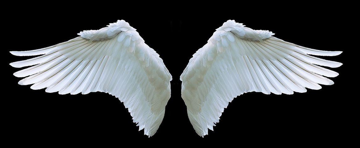 крылья ангела картинка в хорошем качестве авито можете