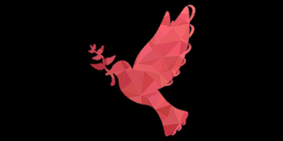 Guvercin Kus Cicek Pixabay De Ucretsiz Resim