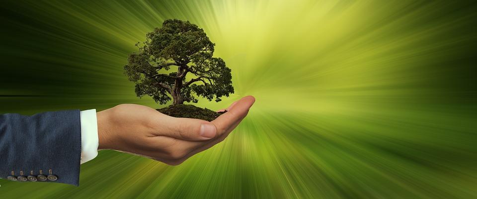 Sustentabilidade, Mão, Manter, Árvore, Energia, Globo