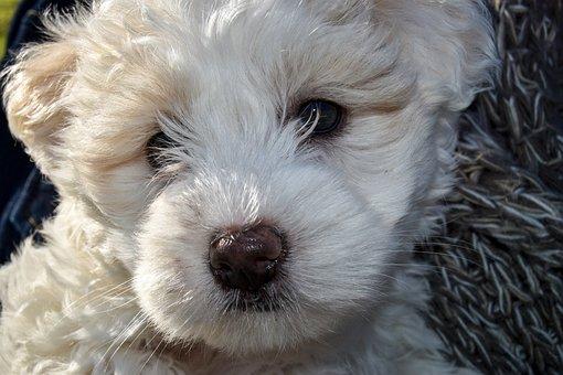 Puppy, Dog, Pet, Canine, Animal, Cute