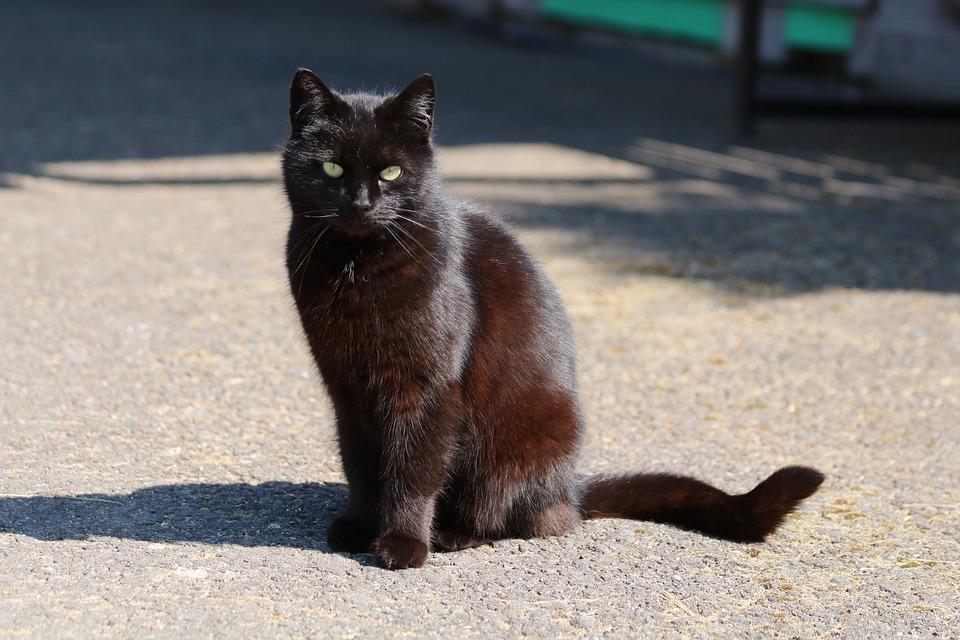 Black Cat Shadow Animal Free Photo On Pixabay