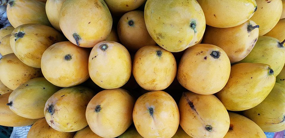 mogen mango