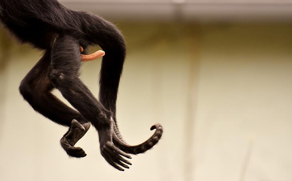 am gone funny monkey zoo tierpark hellabrunn