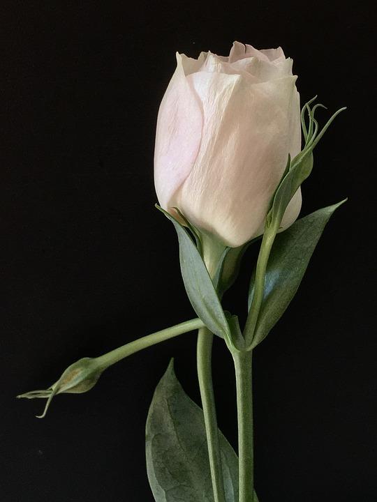 White flower petals free photo on pixabay white flower white petals flower white petals mightylinksfo