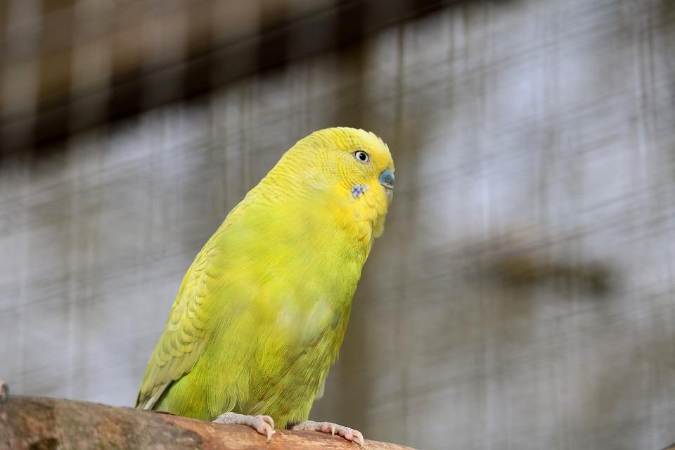 Маленькие попугаи картинки