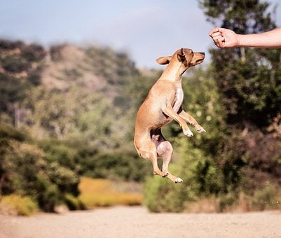 Outdoors, Dog, Nature, Animal, Jump