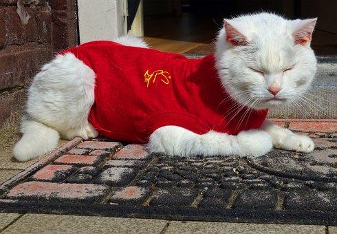 White Cat, Cat, Animal, Mammal, Domestic